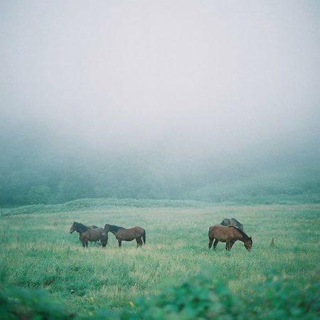 きじひき高原の馬