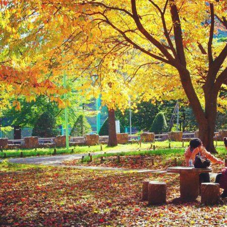 紅葉する公園で談笑する女性