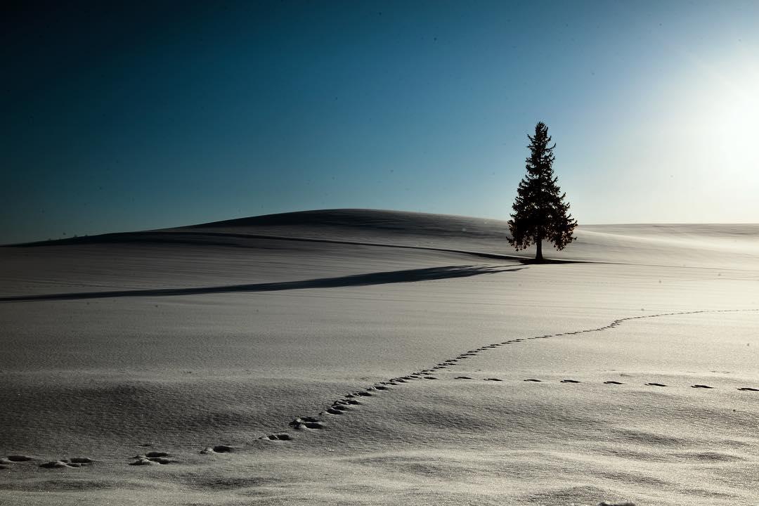 Biei's snowy field tree