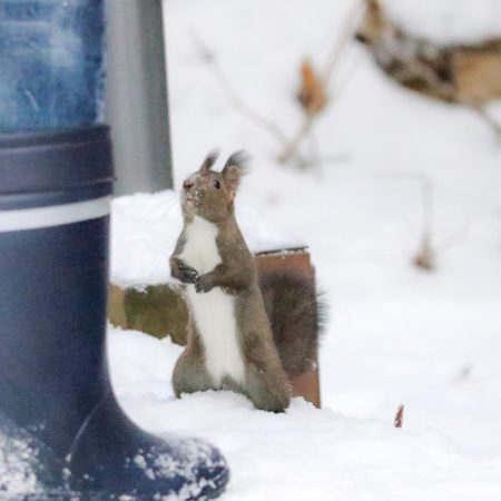 Boots and Hokkaido squirrel