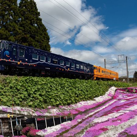 Moss phlox garden and train