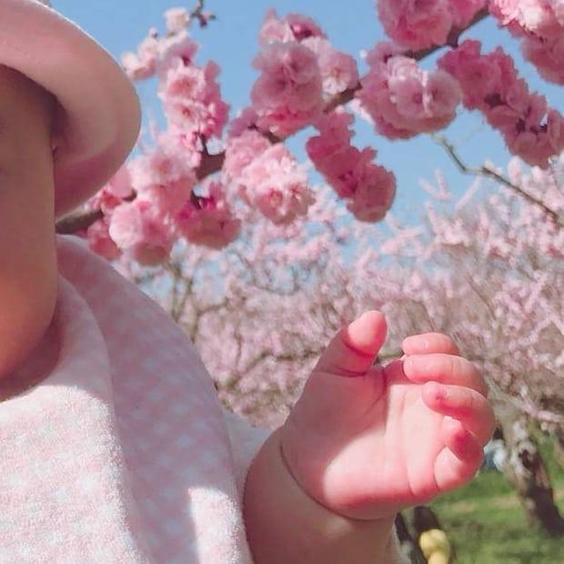 札幌市の梅の花と赤ちゃん