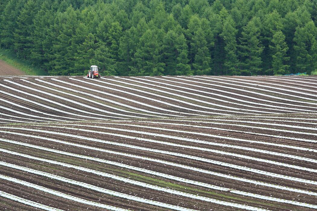 美瑛町の農場