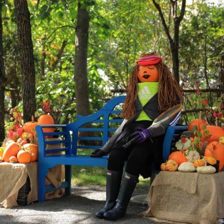 Exhibit of pumpkin at Ueno farm