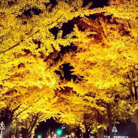 Konyosai festival at Hokkaido University