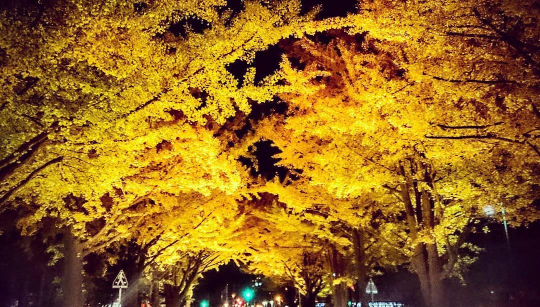 北海道大学の金葉祭