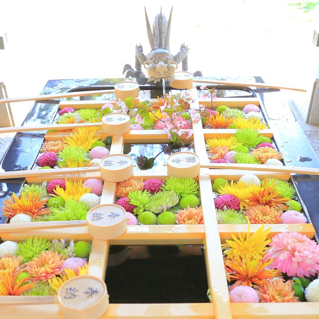 帯廣神社の花手水