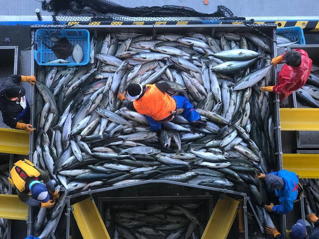 斜里町での漁風景