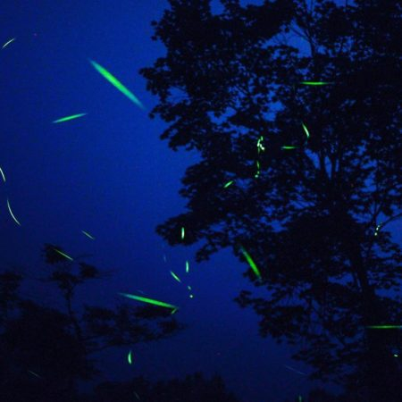 The glow of the firefly in Numata