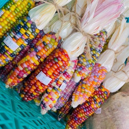 Like a gemstone glass gem corn in Naganuma