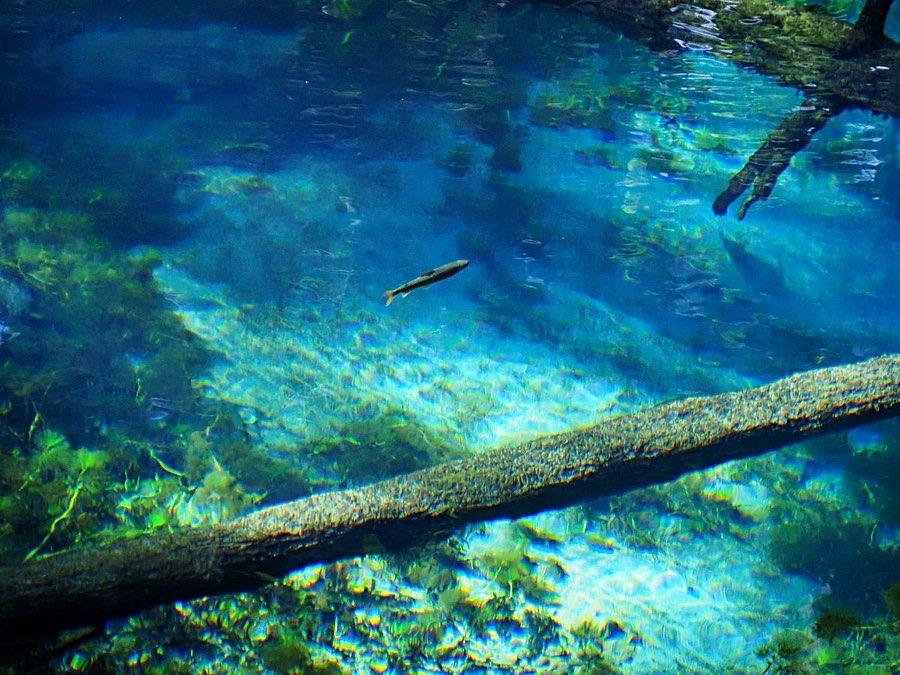 清里町の綺麗な神の子池
