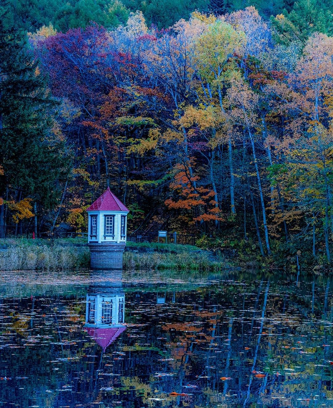西岡公園の紅葉景色