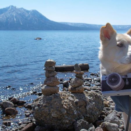 Lake Shikotsu and the cute dog