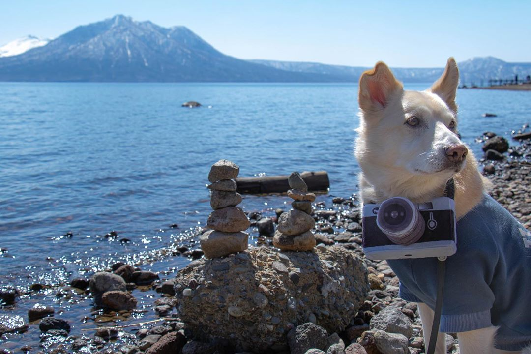 Lake Shikotsu and the cute dog