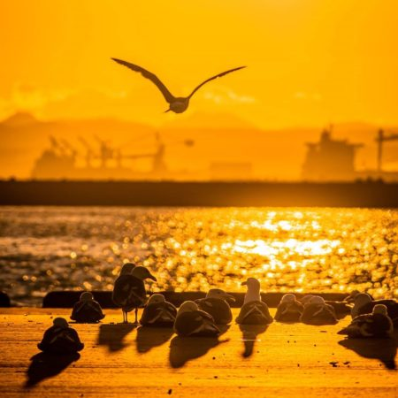 Sunset and  Seagull in Kushiro
