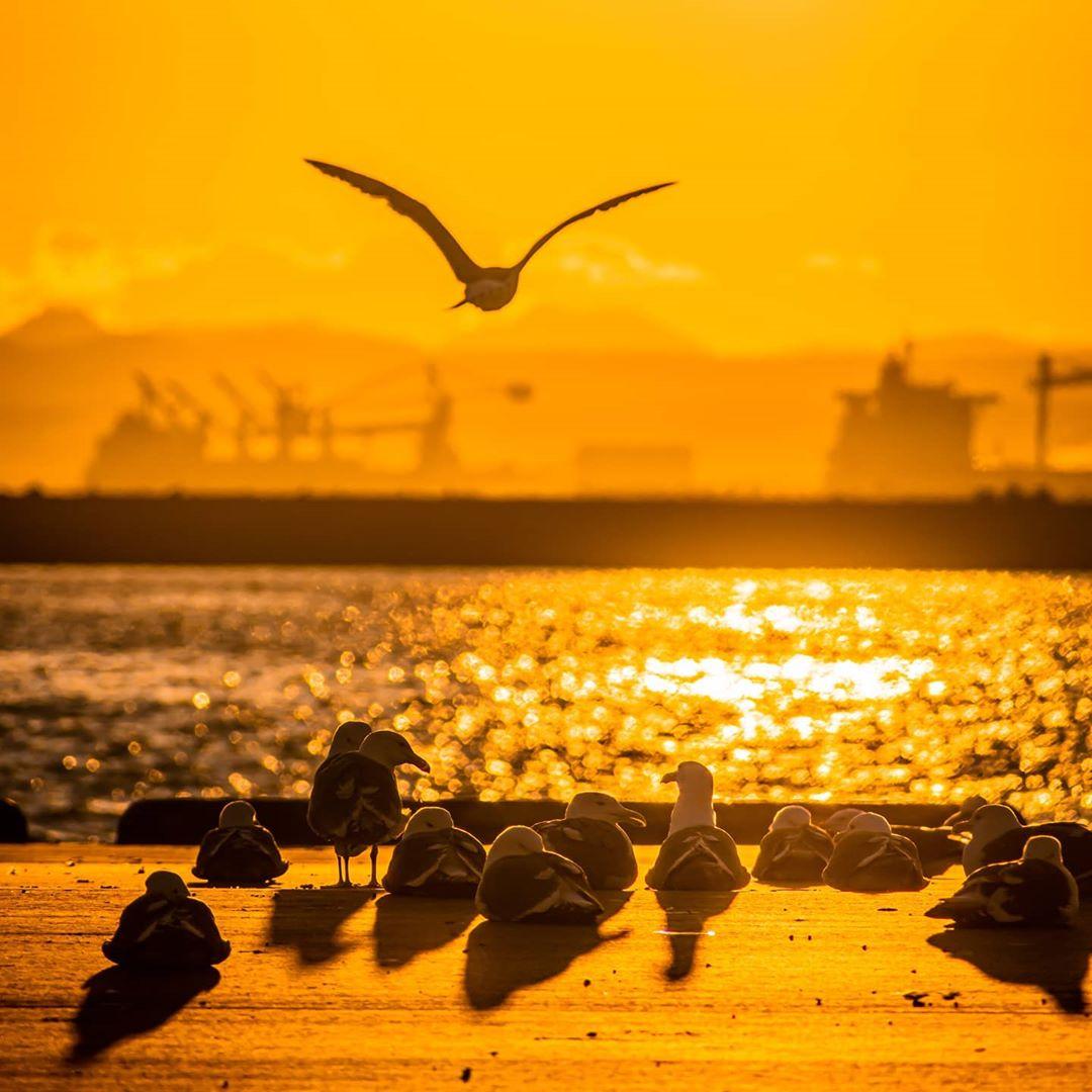 釧路市の夕焼けとカモメ