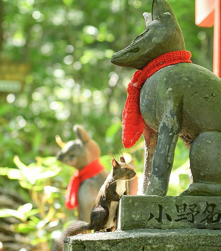 Sciurus vulgaris orientis worshipping in Sapporo