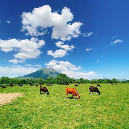 Ranch in Niseko