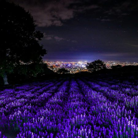 Lavender and night view of Sapporo