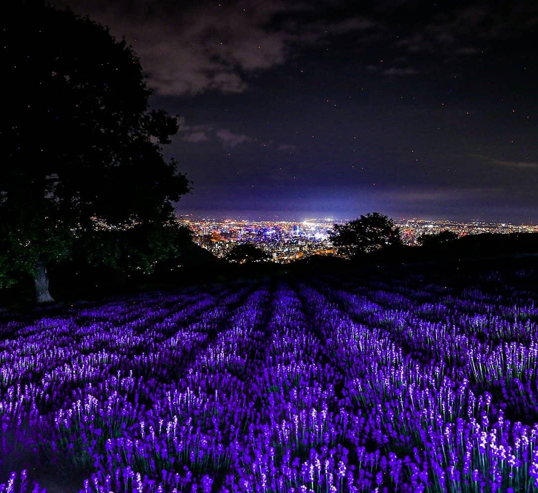 札幌市のラベンダーと夜景