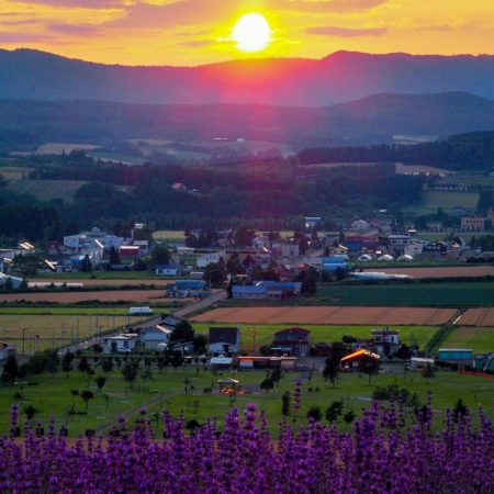 Lavender and sunset in Kamifurano