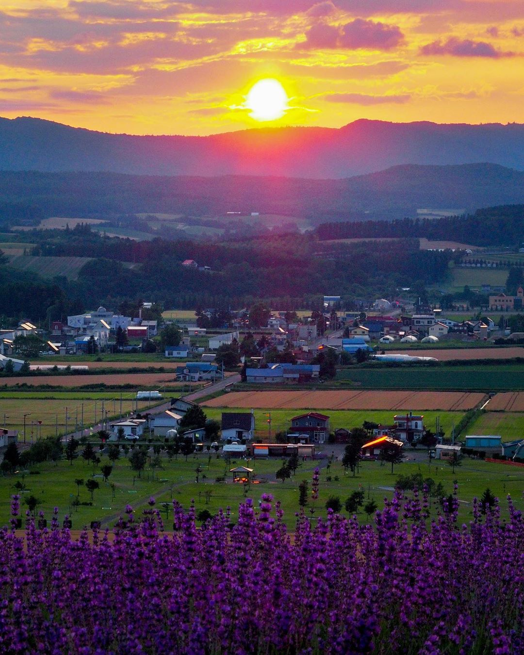 上富良野町のラベンダーと夕日