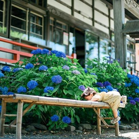 Hydrangea and Boy in Kyowa