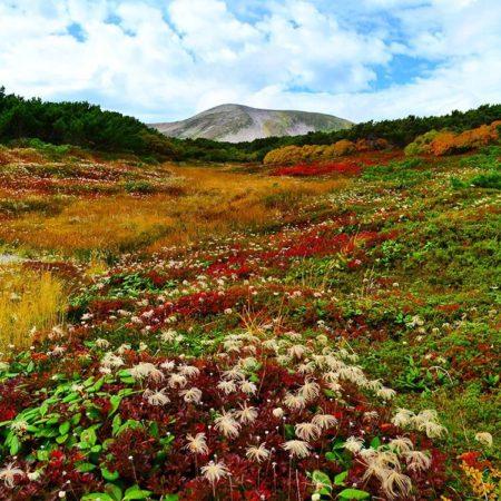 大雪山の草紅葉