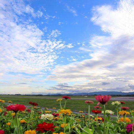 旭川空港の夏空とお花