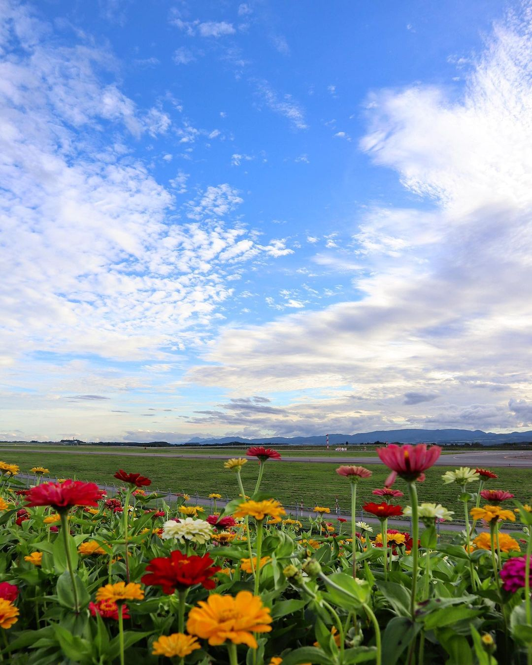 旭川空港の夏空と花