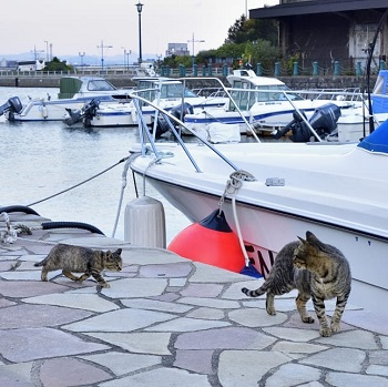 Cats at the marina in Hakodate