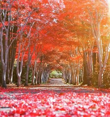 札幌市の紅葉トンネル