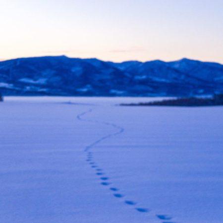 深川市の雪原と足跡