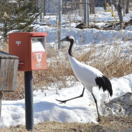 Crane and mailbox (Shibecha)