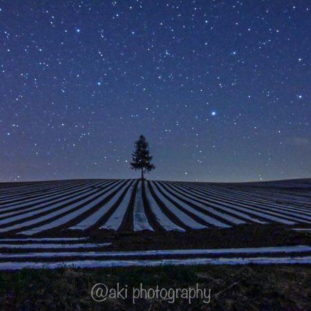 美しい星空と「夕日の木」(美瑛町)