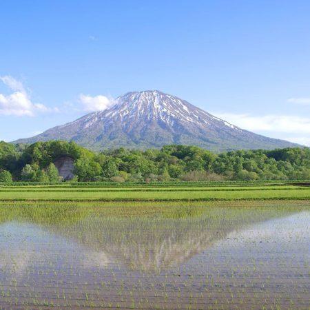 田んぼに映る羊蹄山(倶知安町)