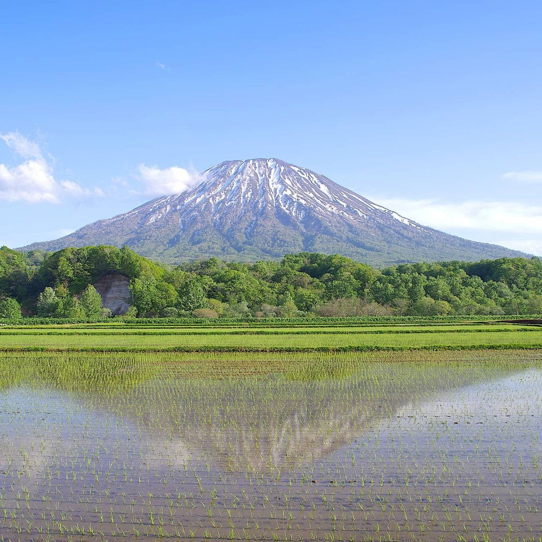 Mt. Yotei reflected in the rice fields (Kutchan)