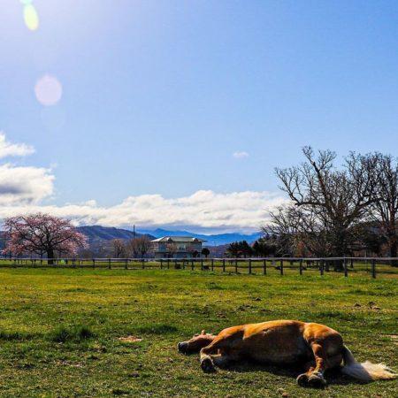 春の日差しを浴びる馬(札幌市)