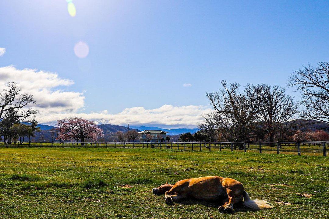 Horse in the spring sun (Sapporo)