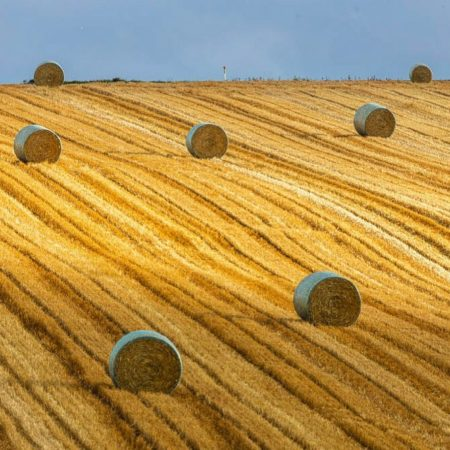 Wheat roll (Biei)