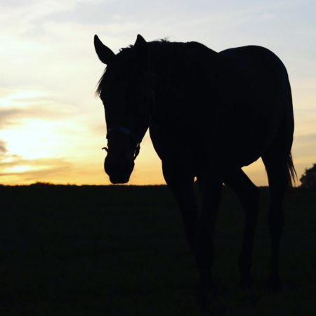 夕暮れ時の美しい馬(安平町)