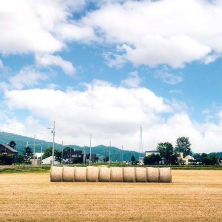 一列に並んだ牧草ロール(当別町)