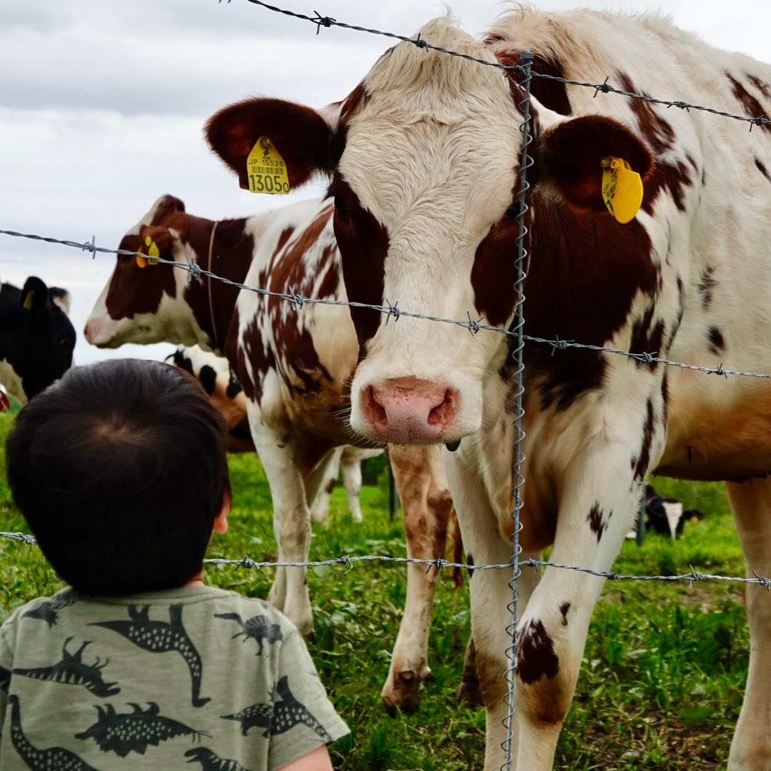 A cow and a child staring at each other (Takikawa)
