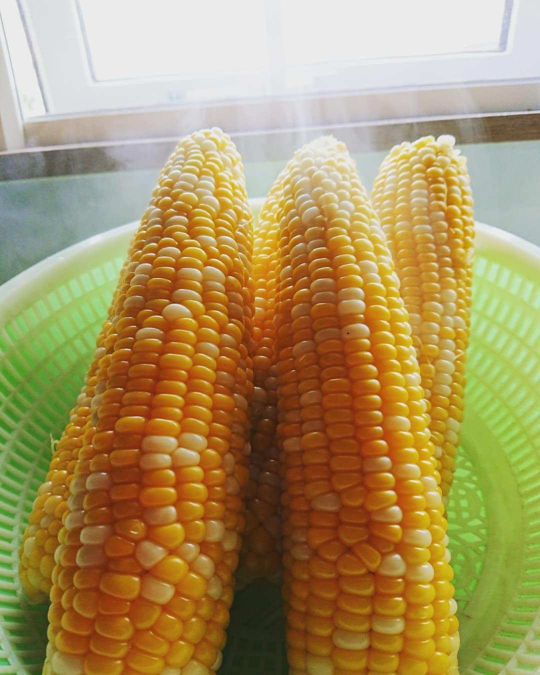 Freshly boiled corn (Shosambetsu)