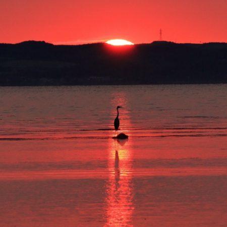 夕焼けに佇む1羽の鳥(網走市)
