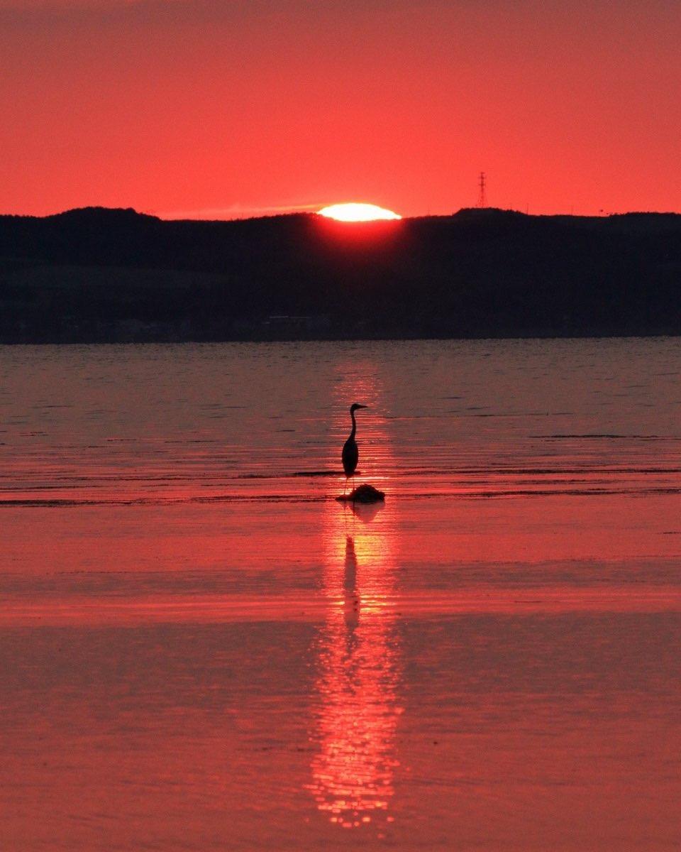 A bird standing in the sunset (Abashiri)
