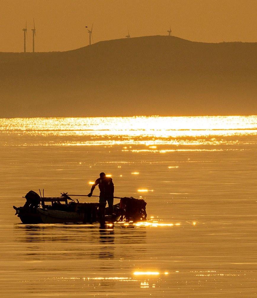 朝日に照らされる昆布漁師(稚内市)